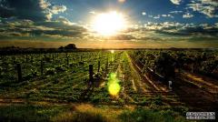 """这款雷盛红酒来自澳洲一个值得""""深藏""""的产"""